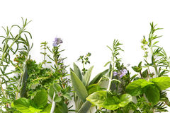 Herb Border stock photo