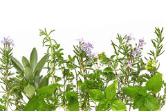 Herb Border Stock Photos
