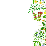 Herb border isolated on white Royalty Free Stock Photos