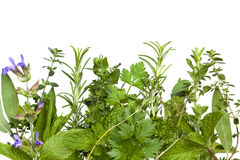 Herb Border over White royalty free stock photography