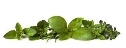 Herb Border on White Stock Photo