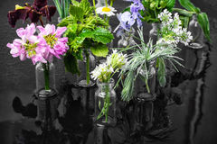 Herb in bottle Stock Images