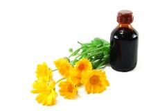 Herb a calendula Royalty Free Stock Photography