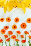 Herb calendula officinalis on a light background with yellow lilies stock photo