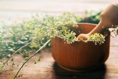 Herb capsella, medicinal herb Royalty Free Stock Image