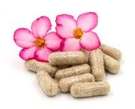 Herb capsules isolated on white background (Medical) Stock Image