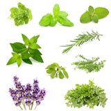 Herb collection Royalty Free Stock Image