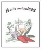 herb czosnków bay kardamonowi liści pieprzowe spice waniliowe rosemary soli Pieprz, czosnek, pieczarka Zdjęcie Royalty Free