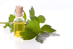 Herb essence Royalty Free Stock Photography