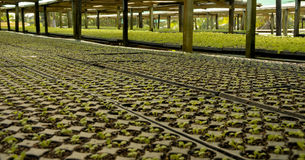 Herb Factory. Commercial herb growing operation under shadecloth cover Stock Photo