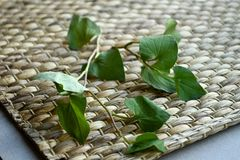 Fish mint Houttuynia cordata leaves isolated on rattan mat. royalty free stock image