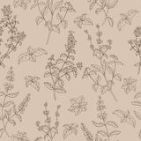 Herb flower graphic sketch beige brown seamless pattern illustration Stock Images