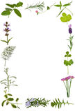 Herb Flower and Leaf Border Royalty Free Stock Photos