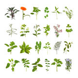 Herb Flower and Leaf Collection. Medicinal and culinary herb flower and leaf selection, isolated over white background stock photo