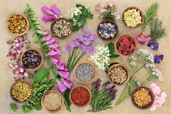 Herb and Flower Medicinal Selection Stock Images