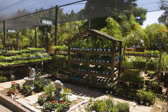 Herb and flower nursery. Herb and flower plants greenhouse organic nursery Stock Images