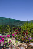 Herb and flower nursery Stock Image