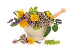Herb Flower Selection. Lavender herb, valerian, ladies mantle and dandelion flowers with aloe vera, sage and lemon balm leaf sprigs in a cream stone mortar with royalty free stock photography