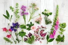 Herb and Flower Medicinal Selection Stock Photos