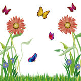 Herb flowerses and butterflies Stock Photo