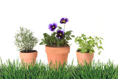 Herb and Foral Spring Time Gardening in Clay Pots Stock Photography