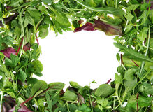 Herb frame Royalty Free Stock Images