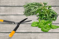 Herb, fresh, freshness Royalty Free Stock Photo