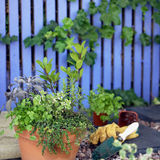 Herb Garden. Collection of Herbs planted together in single pot Royalty Free Stock Images
