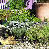 Herb Garden. Collection of Herbs planted together in single pot stock photos