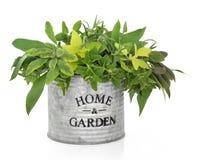 Herb Garden Royalty Free Stock Photo