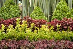 Herb garden Stock Image