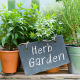 Herb garden. Several garden herbs and slate Stock Photography