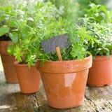 Herb garden. Several garden herbs and slate Royalty Free Stock Photo