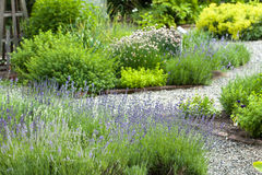 Herb Garden. View of herb garden with gravel path and lavender Stock Image