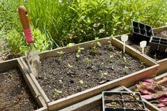 Herb Garden Foto de Stock Royalty Free
