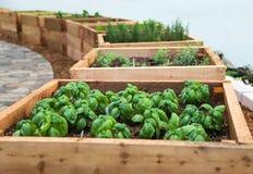 Herb Garden Royaltyfria Foton