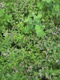Herb Garden foto de archivo libre de regalías