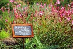 Herb Garden Immagine Stock Libera da Diritti