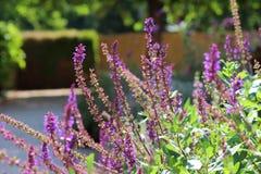 Herb Garden Immagine Stock