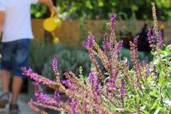 Herb Garden Fotografia Stock