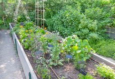 Herb Garden alzato Fotografia Stock