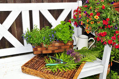 Herb garden bench. Green Herb garden bench plants flowers royalty free stock photo