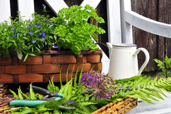 Herb garden bench Stock Image
