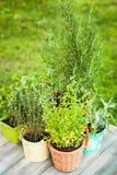 Herb garden Stock Photography