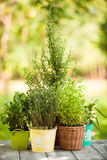 Herb garden Stock Photography