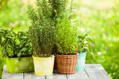 Herb garden Stock Photos