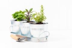 Herb Garden dell'interno fotografia stock libera da diritti