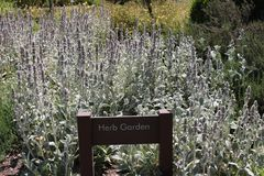 Herb garden at the historical Los Angeles Arboretum and Botanic Garden. One of the herb gardens located inside 127 acre historical Los Angeles Arboretum and stock photography