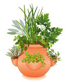 Herb Garden In Old Fashioned Strawberry Jar Royalty Free Stock Photos
