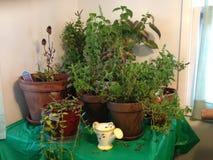 Herb Garden interior imágenes de archivo libres de regalías